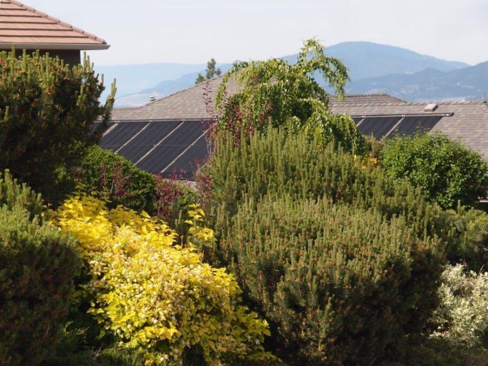 house roof fitted with solar pool panels with attractive shrubbery in the foreground